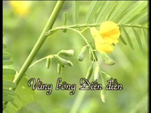 VangBong_DienDien_01